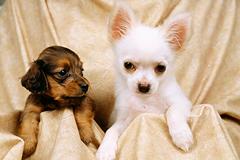 ペット共生住宅に潜む「悩み」を一挙に解決